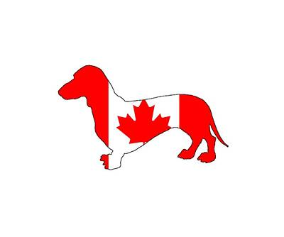 Dachshund Canada Art Print