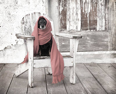 Dog At Door Photograph - Dachshund  Dog Wearing Scarf Sitting On Adirondack Chair by Marie Dolphin