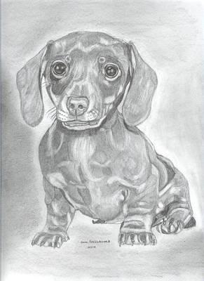 Dachshund Puppy Drawing - Dachshund by Don  Gallacher