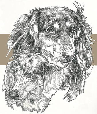 Mixed Media - Dachshund Long-haired by Barbara Keith