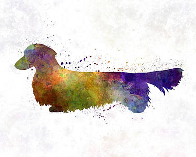 Dachshund Long Haired In Watercolor Art Print by Pablo Romero