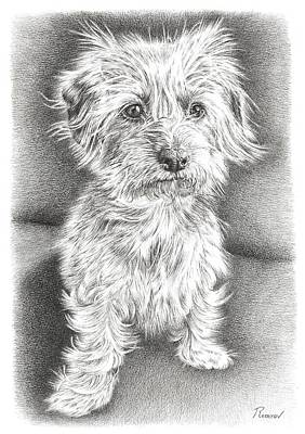 Drawing - Dachshund Maltese by Remrov