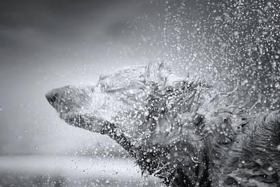 Photograph - Dachshund On The Beach by Mark Andrew Thomas