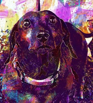 Dachshund Art Digital Art - Dachshund Pet Dog Purebred Canine  by PixBreak Art