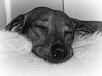 Cute Dachshund Digital Art - Dachshund Sleeping On Fluffy Stuffed Bear by Trish E Harmon