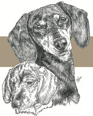 Mixed Media - Dachshund Smooth-coat by Barbara Keith
