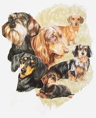 Purebred Dogs Drawing - Dachshund W/ghost by Barbara Keith