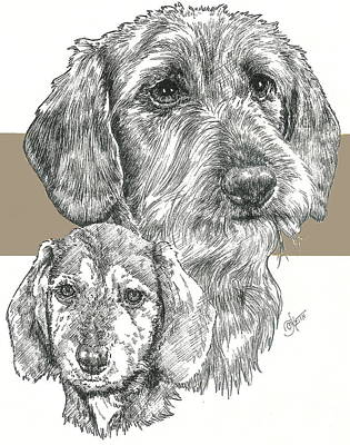 Mixed Media - Dachshund Wire-haired by Barbara Keith
