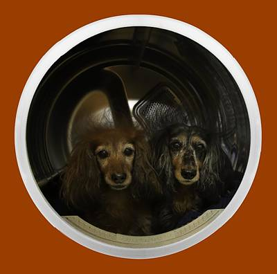 Wiener Dog Digital Art - Dachshunds In The Dryer by Randy Turnbow