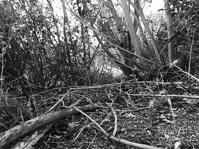 Dachshund Photograph - Dachshund's Perspective by Leah McPhail
