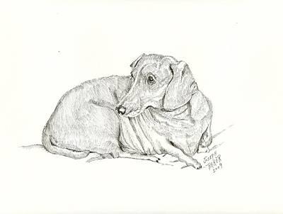 Dachsund Drawing - Dachsund by Joseph Baker