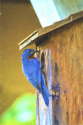 Photograph - Daddy Bluebird Embellished by Kay Brewer