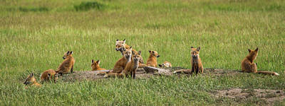Photograph - Daddy's Foxy Daycare by Yeates Photography