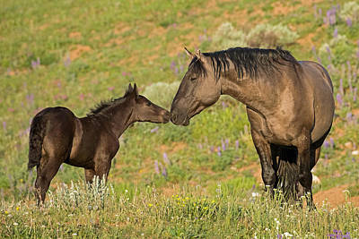 Wild Mustang Photograph - Daddy's Girl by Sandy Sisti