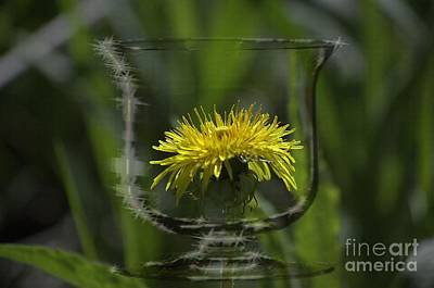 Dandelion Digital Art - Dadelion Wine by The Stone Age