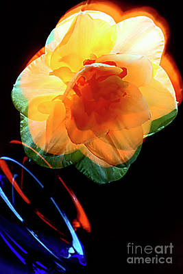 Daffodil And Game Of Colors. Art Print by Alexander Vinogradov