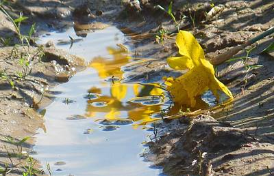 Photograph - Daffodil And Reflection by Karen Molenaar Terrell