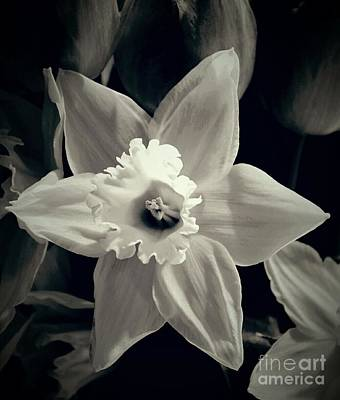 Photograph - Daffodil And Tulips  by Angela J Wright