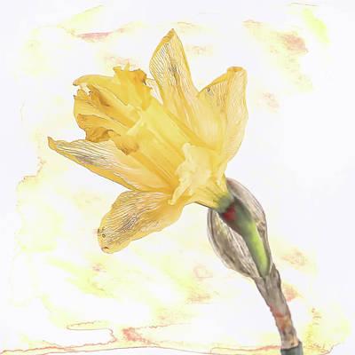 Photograph - Daffodil Art by Jennifer Grossnickle