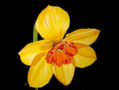 Daffodil Original by Carol Blackhurst