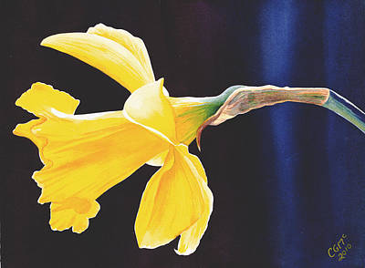 Daffodils Painting - Daffodil by Catherine G McElroy