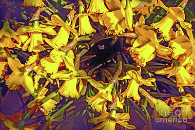 Photograph - Daffodil Dance by Sandy Moulder
