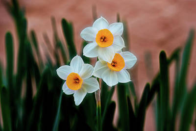 Photograph - Daffodil by Dennis Reagan