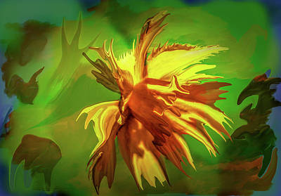 Photograph - Daffodil Distorted #h3 by Leif Sohlman