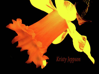 Digital Art - Daffodil Drama by Kristy Jeppson
