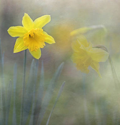 Photograph - Daffodil Dreams by Angie Vogel