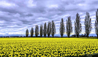 Photograph - Daffodil Fields by Steph Gabler