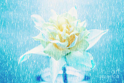 Daffodil Flower In Rain. Digital Art Art Print