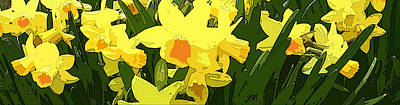 Abstract Digital Art - Daffodil Flower Panorama Abstract by Linda Mears