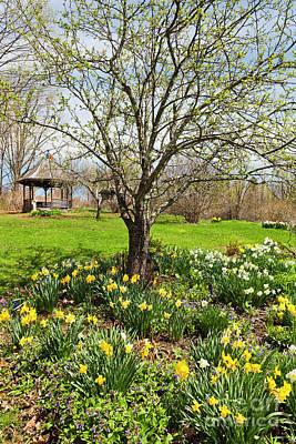 Photograph - Daffodil Garden by Alan L Graham