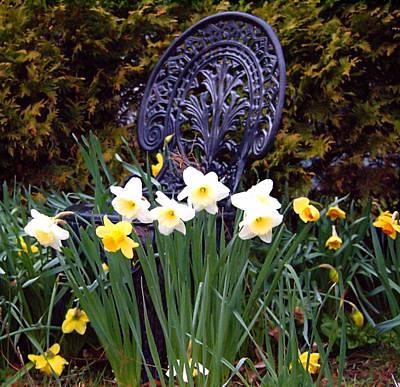 Photograph - Daffodil Garden by  Newwwman