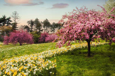 Cherry Tree Photograph - Daffodil Heaven by Jessica Jenney