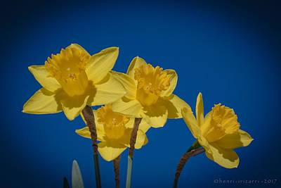 Photograph - Daffodil by Henri Irizarri