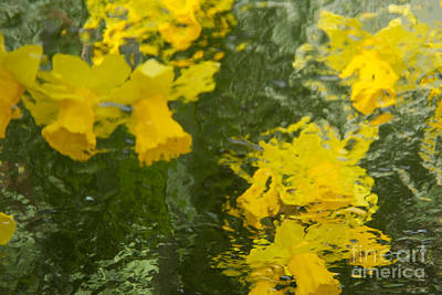 Photograph - Daffodil Impressions by Jeanette French