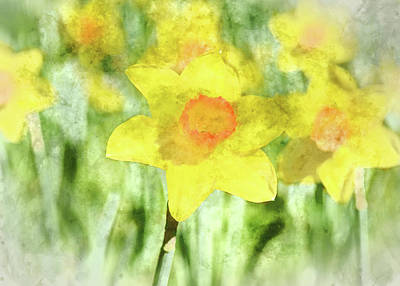 Photograph - Daffodil In Spring - Digital Art Watercolor by Brandon Bourdages