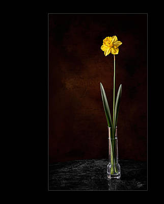 Photograph - Daffodil In Vase by Endre Balogh