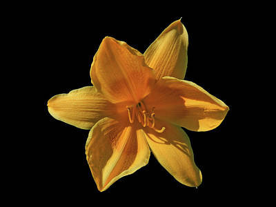 Photograph - Daffodil by Mark Blauhoefer