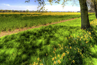 Photograph - Daffodil Meadow by David Pyatt