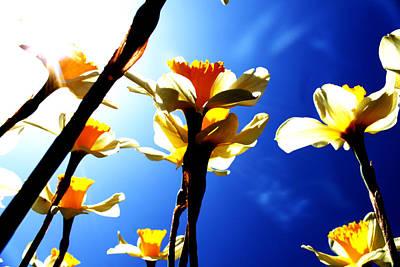 Daffodil Art Print by Nathan Grisham