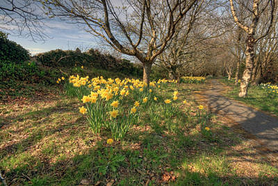 Daffodil Path Original by John Quinn