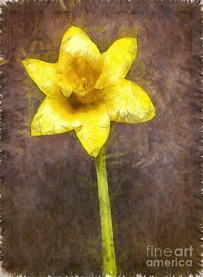 Daffodils Photograph - Daffodil Pencil by Edward Fielding