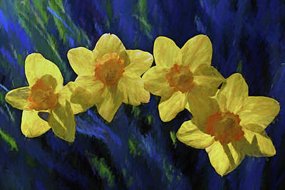 Photograph - Daffodil Quartet by Jerry Gammon