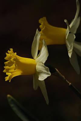 Photograph - Daffodil by Ramona Whiteaker