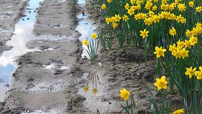 Photograph - Daffodil Reflection by Karen Molenaar Terrell