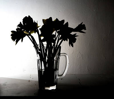Photograph - Daffodil Shadows by Kathryn Bell