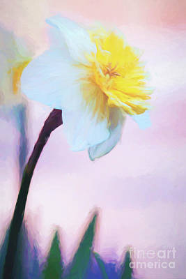 Photograph - Daffodil Smiling At The Sky by Anita Pollak
